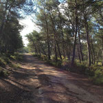 Bois de Boulard