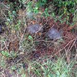 Toiles d'araignées mises en valeur par le brouillard