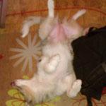 Die Lieblingsschlafposition
