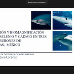 """Examen de grado de la Dra. Ariagna Lara Lorenzo con la disertación de su trabajo de tesis titulado """"Bioacumulación y biomagnificación de mercurio, selenio y cadmio en tres especies de tiburones de Bahía Tortugas, México"""""""