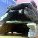 akvaryum için mağara yapımı