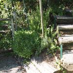 garteneingang im rebberg mit gewürzgarten (bitte mitnehmen zum kochen)