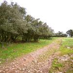 Towards Grimaldo
