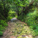 Old paved path leads downhill to Orio