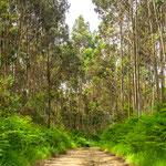 Forest path close to Soto del Barco