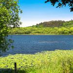 Sabrado lake at Sobrado dos Monxes