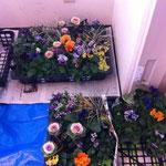 花材。どれにしようか、迷います。
