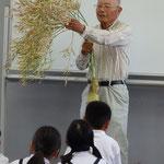 大根も背が高くなって,たくさん種をつけるんですよ。