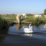 Location de vacance proche de St Omer