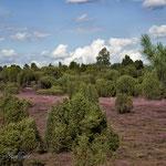 Das Wacholder Heidegebiet