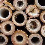 Große und kleine Insektenhotels... hier ist schon ein ganz Neues bezogen worden!