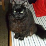 Rauke - the watching cat