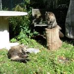 Snorri im Gras und Svea auf ihrem Hochsitz