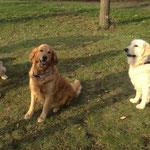 Luke, Indy, Louie