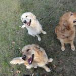 Luke, Louie, Indy