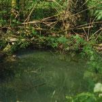 L'Abîme (résurgence du réseau souterrain de Naudonnet, au bord de l'Euille)