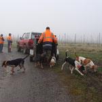 Arrivée des chiens courants à Miaille (maison de Barabès)