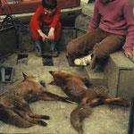 Vincent Roques et Bernard Mainard ont promené deux renards dans la commune d'Escoussans.