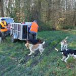 Arrivée des chiens courants au Bois de la Lanne