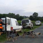 Les chiens traversant la route montant à Pasquet