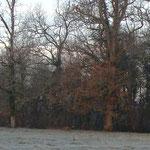 Un chevreuil à la lisière du bois de la Tirentaine