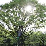 武道館横の北の丸公園はのんびり。