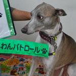 会員No.218 ジュリアン 2006年8月16日生まれ。ウイペットの女の子 飼い主に似て、(笑)のんびりですが、走ると速いよ。セラピー犬もやってます。毎日手作りご飯を食べて、糸島生活を楽しんでます。