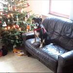 1.Weihnachten zu Hause