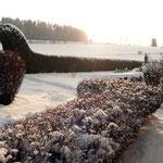 Winter in unserem Garten
