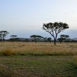 La vista dalla nostra veranda (con le zebre)