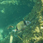 Unterwasser fotografieren. mitsegeln auf dem Segeltörn im Mittelmeer Koje buchen