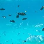 schnorcheln im Naturschutzgebiet mitsegeln zwischen Korsika und Sardinien