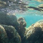 der Segeltörn Sardinien Korsika eignet sich auch für Schnorchler. das Mittelmeer unter Wasser
