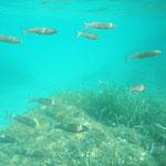 Sommer, Meer, baden und schnorcheln von der Segelyacht ins Wasser springen