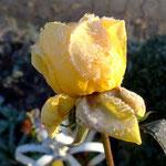 Eine gelbe Sonne im Garten.