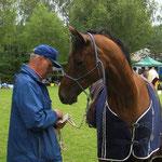 Kein Pferd kann so hübsch die Ohren spitzen und erwartungsvoll dreinschauen wie Johari