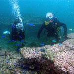 黒崎ビーチ 水深 6~8 m