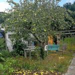 Sitzecke unterm Apfelbaum