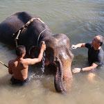 "Kanchanaburi im ""Elephant Sanctuary"""