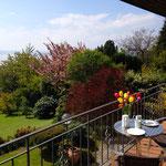 Blick vom Balkon auf den Garten