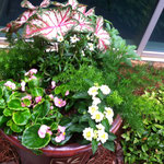 Seasonal Color Container