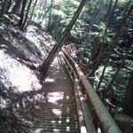 乙女の森遊歩道