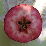 Genüsslicher Sommer-Blutapfel Sorte Circe