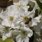 Blütenflor