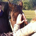 Praxis am Pferd Craniosacrale Therapie