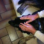 Praxis am Hund Craniosacrale Therapie