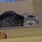 huhu ich verstecke mich in der Kiste...