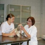 Patient m. in Richtung Hornhaut wachsenden Wimpern