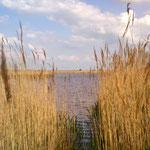 """Sieht aus wie See, ist aber nur Lacke: Jetzt im Frühjahr waren die """"Neben-Seechen"""" unter Wasser (eine Handbreit, schätze ich). Dementsprechend lautstark war das Vogelgebrüll."""