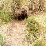 So ein Loch im Gras macht neugierig. Was sich darin verbergen mag? Das nächste Foto weißt schon mehr.